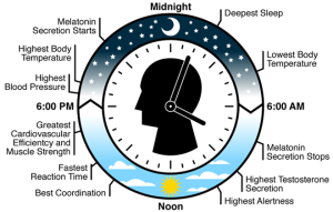 Features of the human circadian (24hr) rhythm. (credit: The Gladstone Institutes)