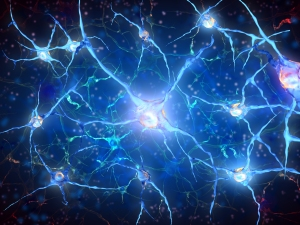 The PSR-1 molecule, which normally clears out dead or dying nerve cells, has also been observed trying to repair them.