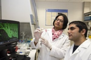 South Dakota State University doctoral student Bijaya Upadhyaya and associate professor Moul Dey and others published a study suggesting a natural chemical found in plants could potently kill cancer stem cells.