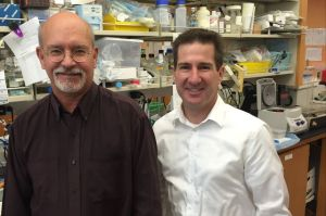 Jerome Zack (left) and Scott Kitchen, found that the technique decreased HIV levels in mice by 80 to 95 percent.