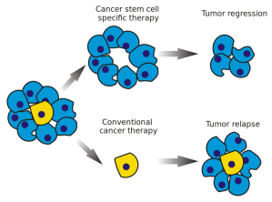 930px-Cancer_stem_cells_text_resized