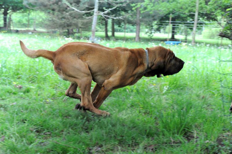 M Landsky- Bloodhound Funding a clini...