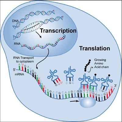 transcription_2