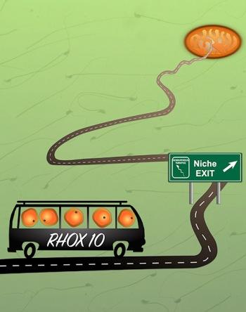 Rhox10 bus_HW, 9-26-16.jpg.jpg