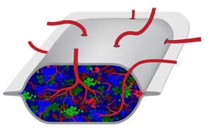 ViaCyte's PEC-Direct device allows a patient's blood vessels to integrate and make contact with the transplanted beta cells.