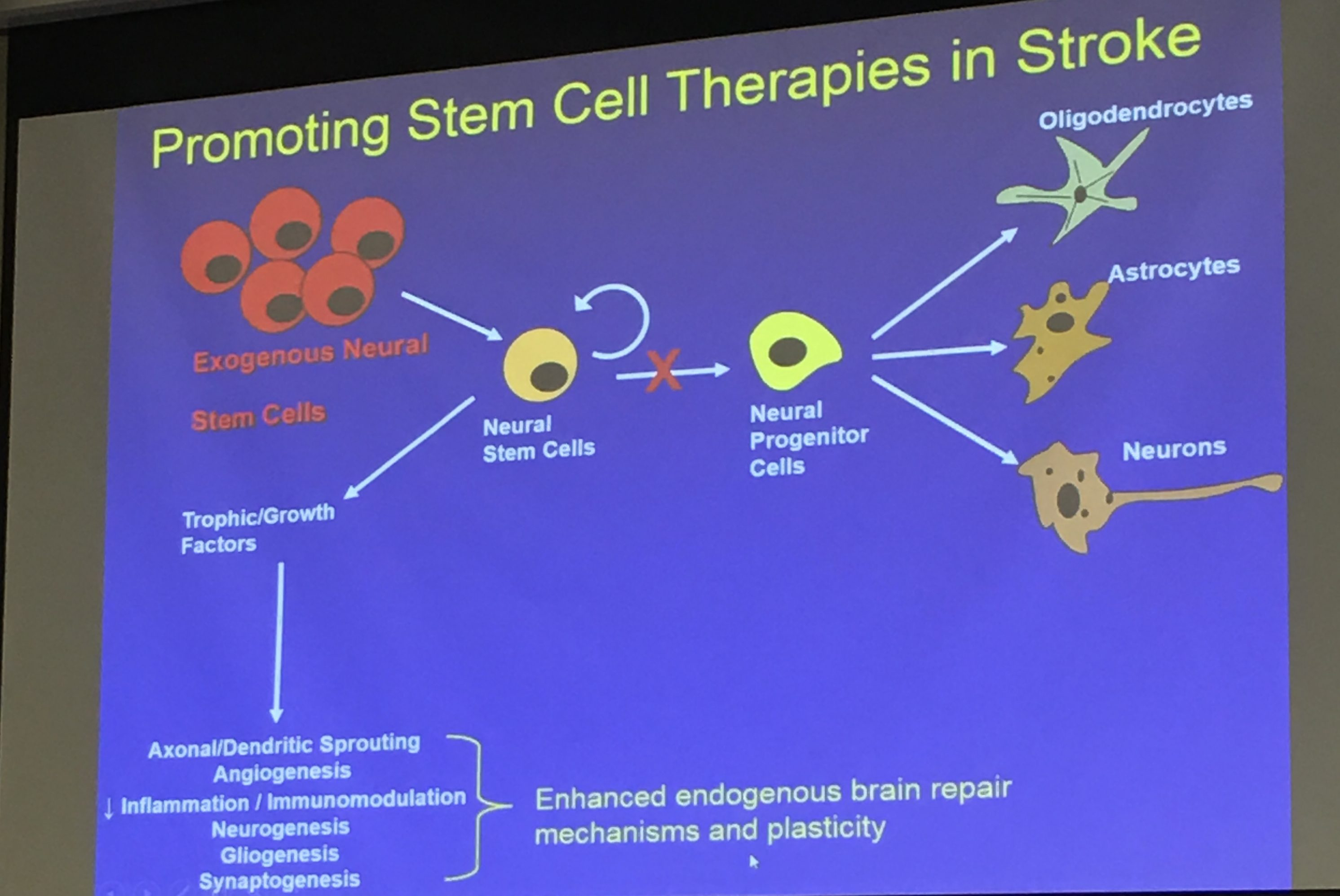 Stem cells - a panacea for all diseases