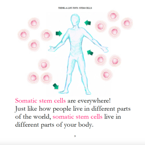 somatic-stem-cells