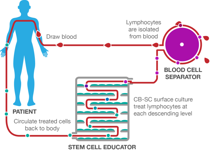 Stem+Cell+Educator+Therapy+Process