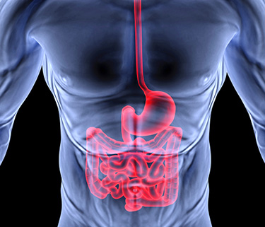 Protein That Turns Normal Cells Into Cancer Stem Cells Offers Target To Fight Colon Cancer The Stem Cellar
