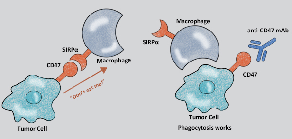 First 'off-the-shelf' cancer immunotherapy