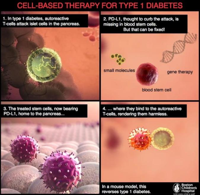 Cell based image for t 1 diabetes