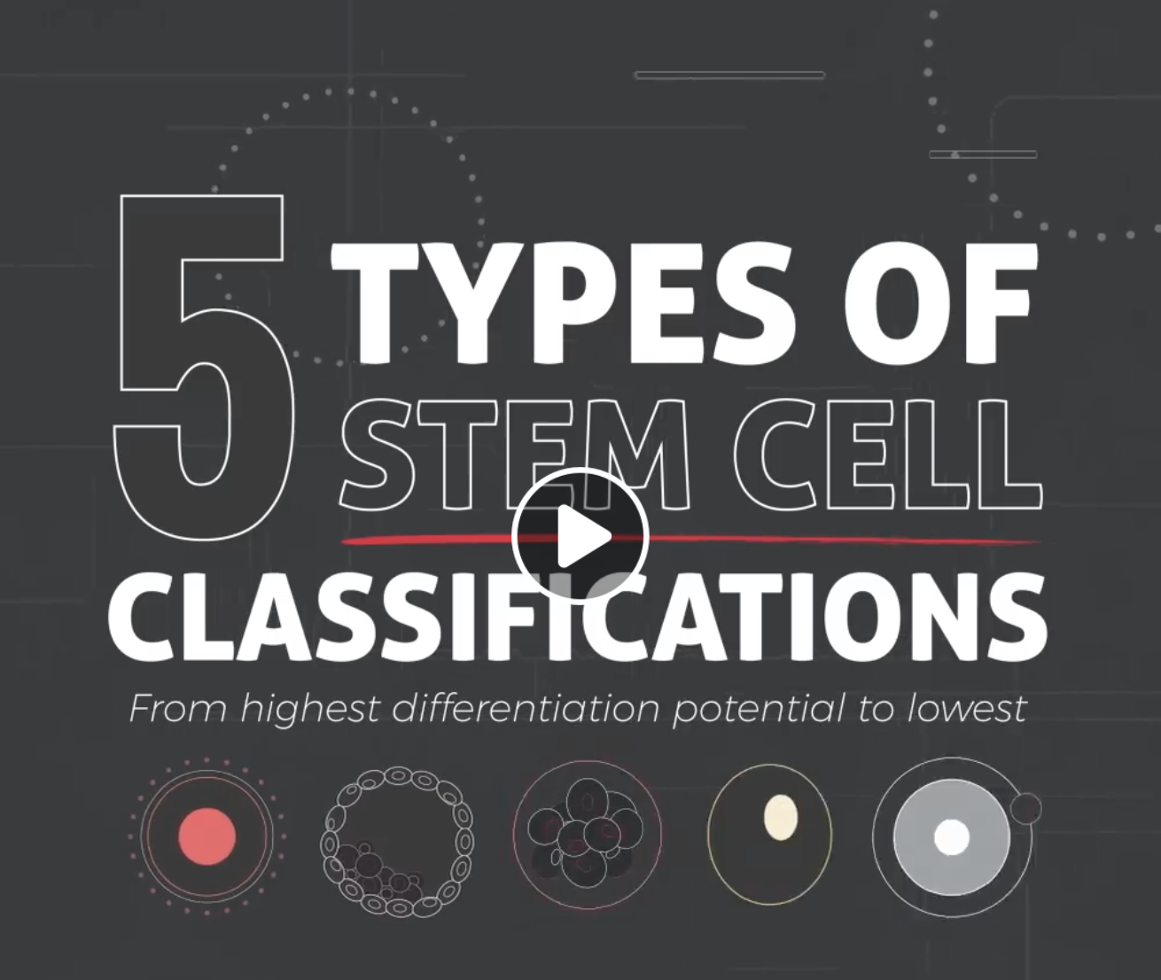 The Five Types Of Stem Cells