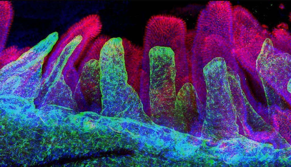 FDA | The Stem Cellar
